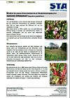 Infoblatt Springkraut