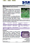 Infoblatt Beifuß- Ambrosie