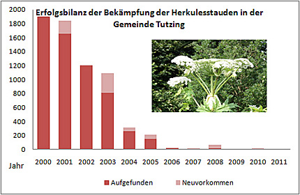 Erfolgsbilanz der Bekämpfung der Herkulesstauden in der Gemeinde Tutzing