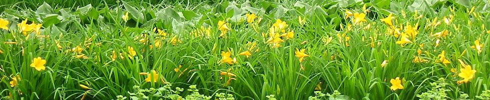Gartenkultur und Landespflege