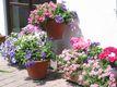 Blumenpracht ohne Torf